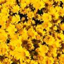 Yellow-Is-Nice