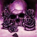 _Night_Rose_
