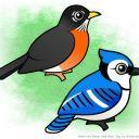 birdyunknown