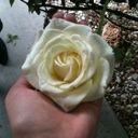 black_rose_child