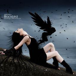 blackbird49