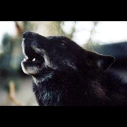 blackwolf122