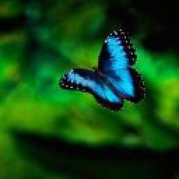 butterflysky44