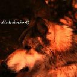 chlodochar5wolf
