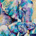 elephant44