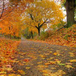 Dedicated Server Price Dedicated Server India Dedicated Server Price Dedicated Server Hosting India Wattpad
