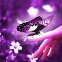 fallenbutterfly