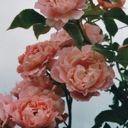 flowerbinsh