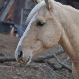 horsecrazyxoxo
