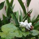 Flower   Keyla S