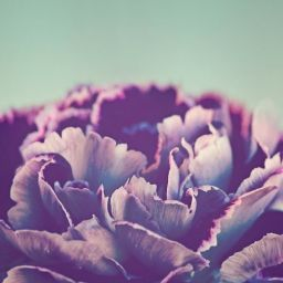 lavendersimplicity