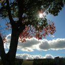 Ardaysia