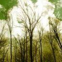 lushwoods