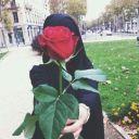 Mawar Senja