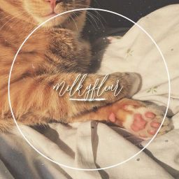 Tristful Warrior Cats Graphic Shop Aceisforeverloved Wattpad