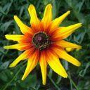 mojoflower