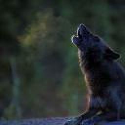 musicwolf19