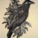 mysteriousbird