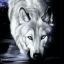 night_wolf97