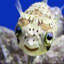 orangefish340