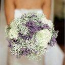 purplebluestar