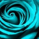 Rose Alysse