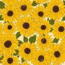 sunflower_artist