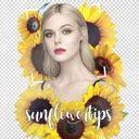 sunflowertips