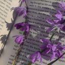 the_moonlight_writer