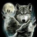 twlightwolf