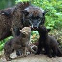 werewolfvampirelife