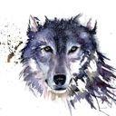 wolf-diamond
